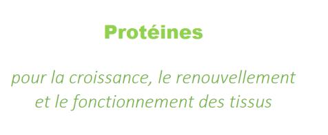 2 protéines